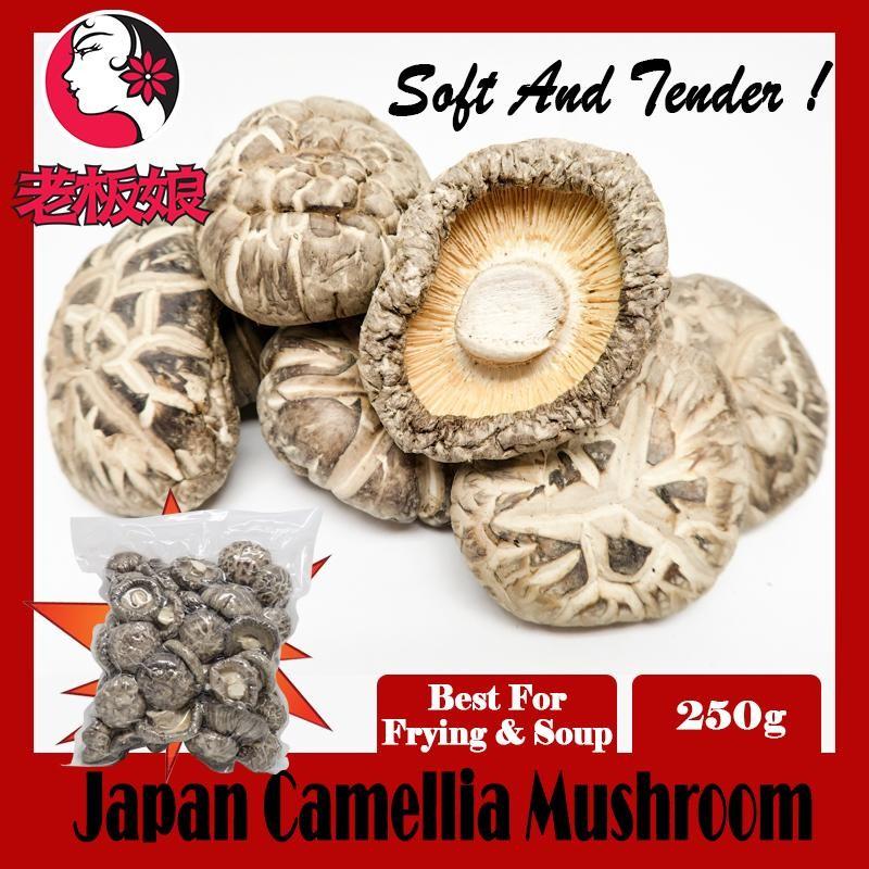 Japan Camellia Mushroom